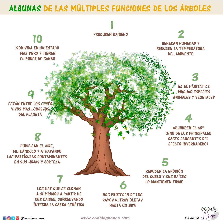 3 incre bles proyectos de reforestaci n tips para for Dia del arbol 01 de septiembre